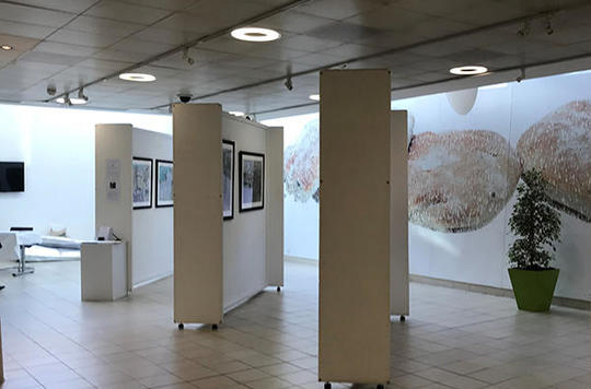 Kerry's exhibition at IHW